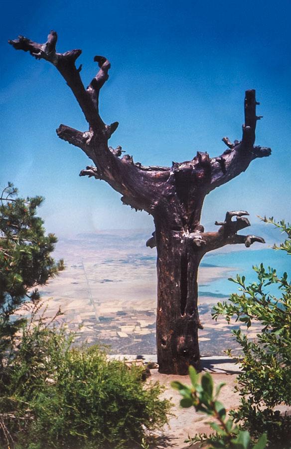 Bediüzzaman Said Nursi'nin sıklıkla üzerinde saatlerce tefekkür ettiği, Tolkien'in en sevdiği ağacın kaderini paylaşıp kesilen meşhur katran ağacı