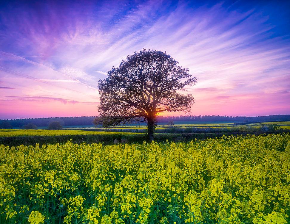 Tolkien'in Shire'ını andıran bir Warwickshire günbatımı