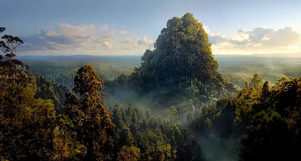 Galadriel Hanım'ın mallorn ağaçlarına kurulmuş şehri Caras Galadhon